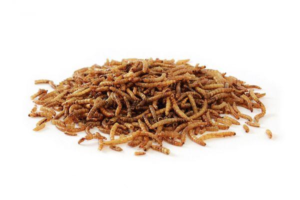 Mehlwürmer getrocknet 20kg