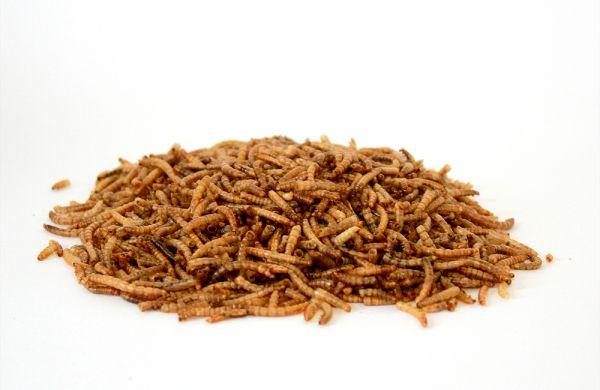 Mehlwürmer getrocknet