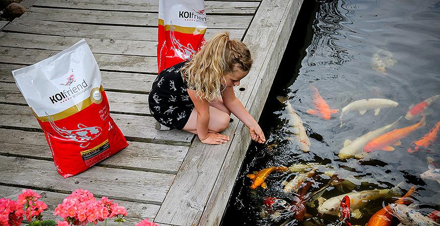 Fuetterungstipps Koi und Teichfische