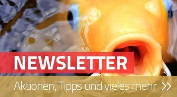 Hier kannst Du Dich für unseren Newsletter anmelden.